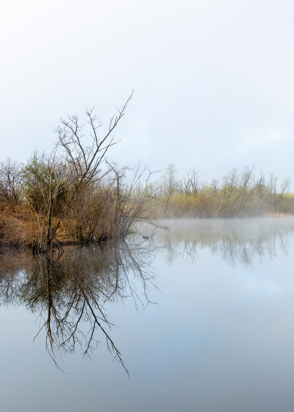 bare tree by calm body of water