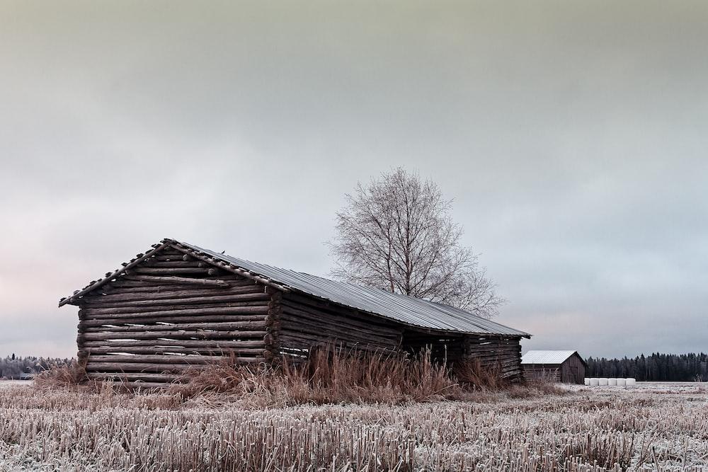gray wooden barn house near bare tree