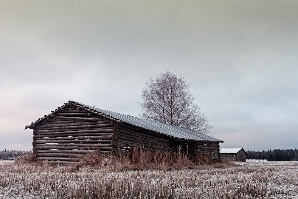 gray wooden barn house near bare tree