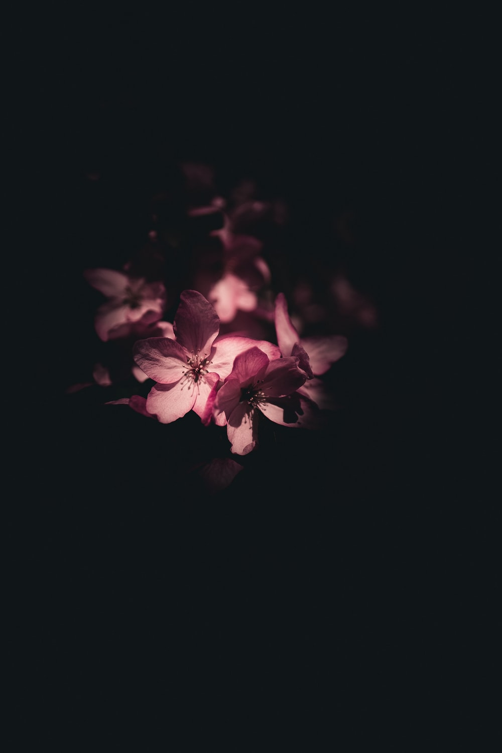 dark photography of pink petaled flower