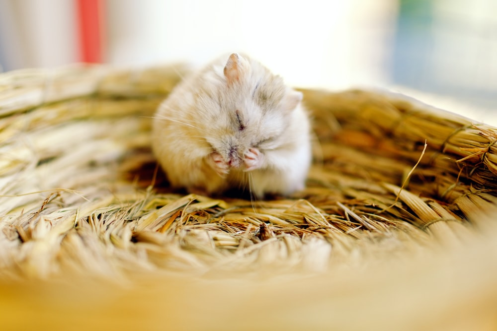 selective focus photography of mouse