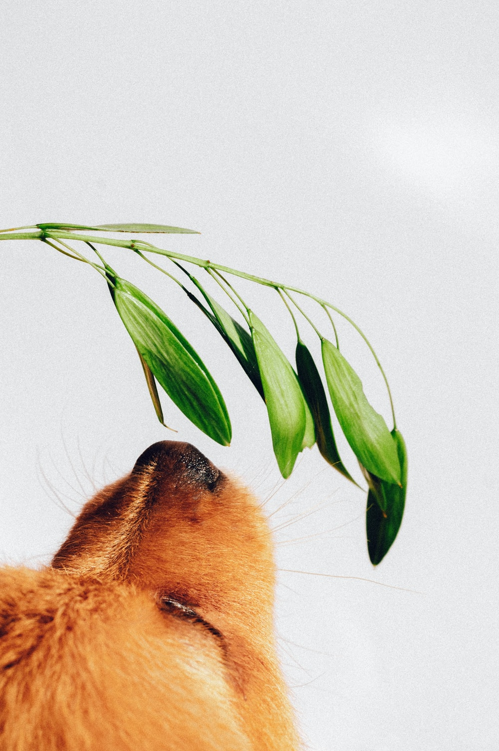low angle photo of tan dog