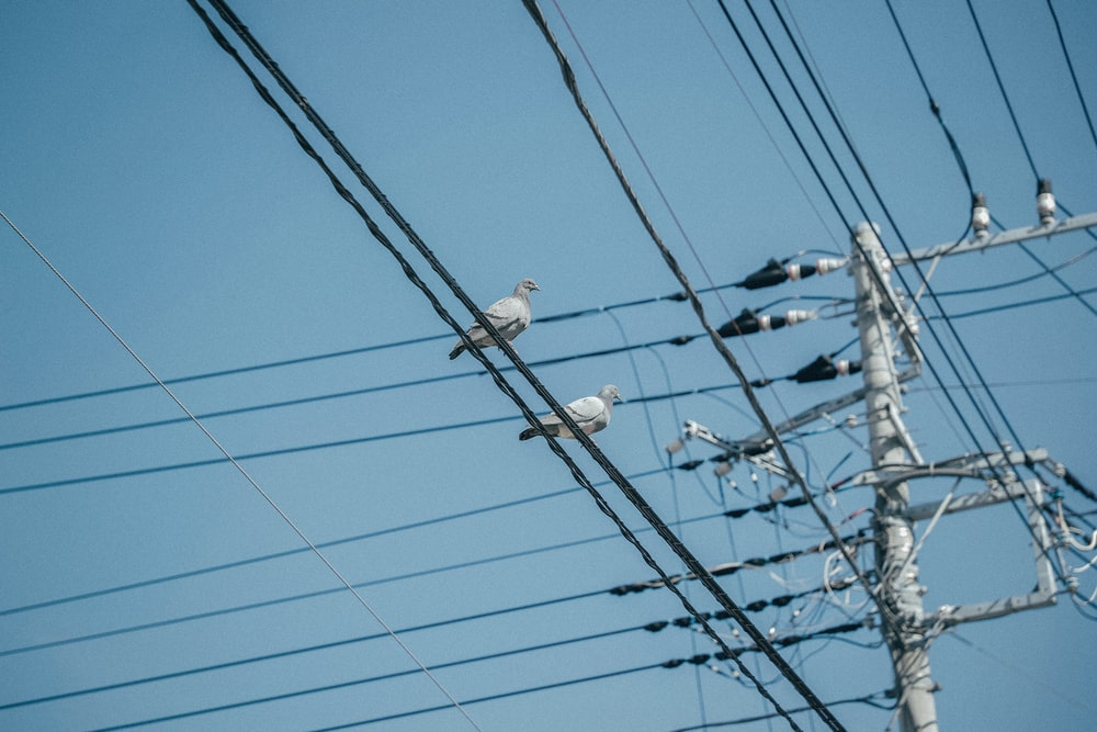 two birds perched on electric cable near post