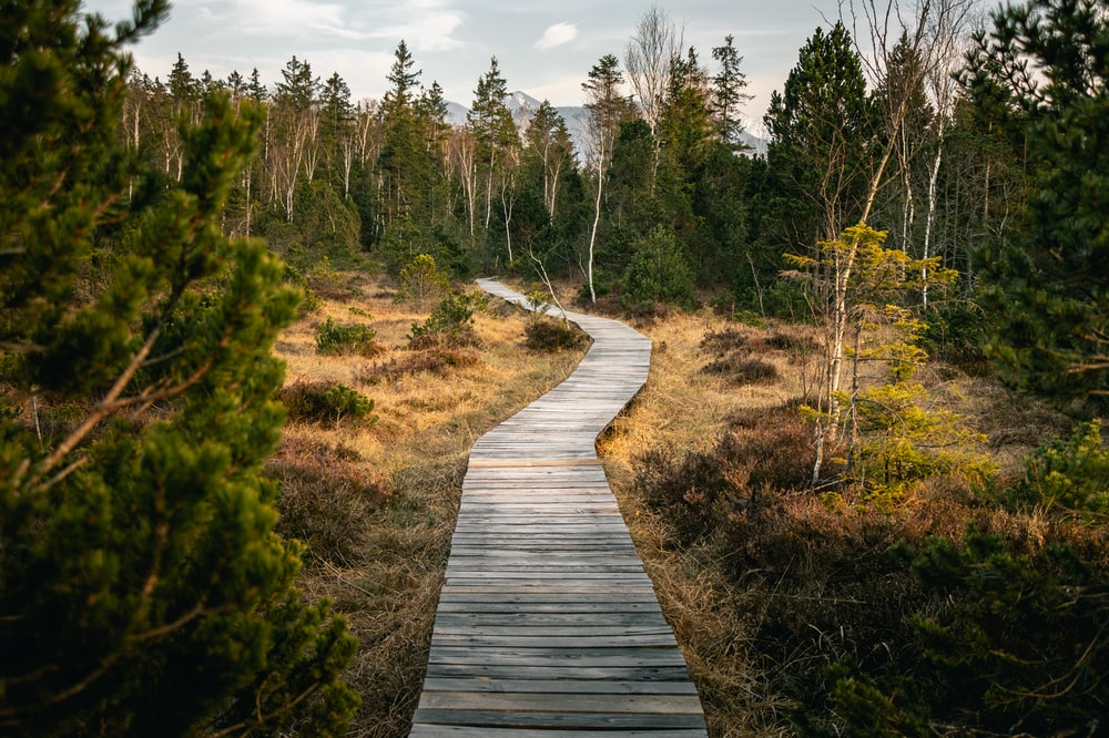 wooden pathway near forest during daytime