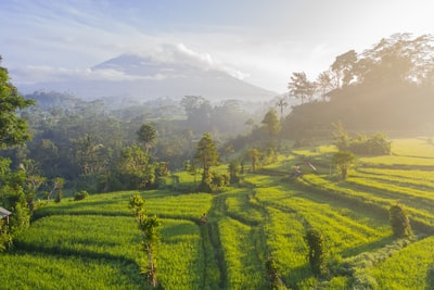 green grass field photography bali zoom background