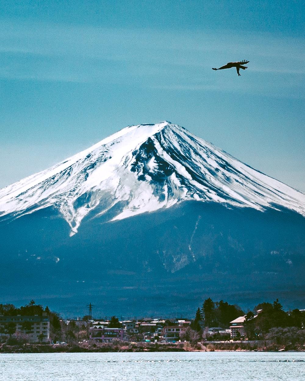 bird flying near snow mountain