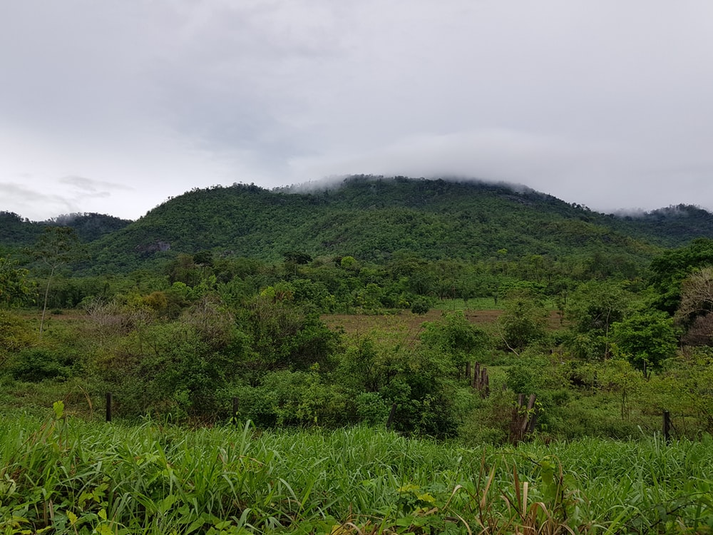 mountain surrounded with trees
