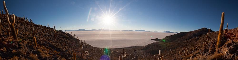 cactus on mountain slope overlooking desert