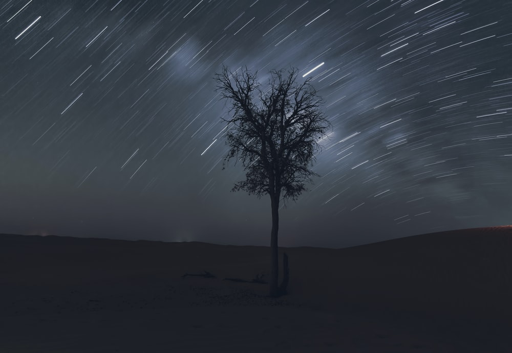 tree at the desert under time lapse background