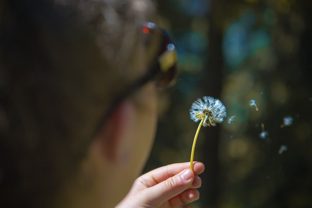 selective focus photography of man blowing dandelion