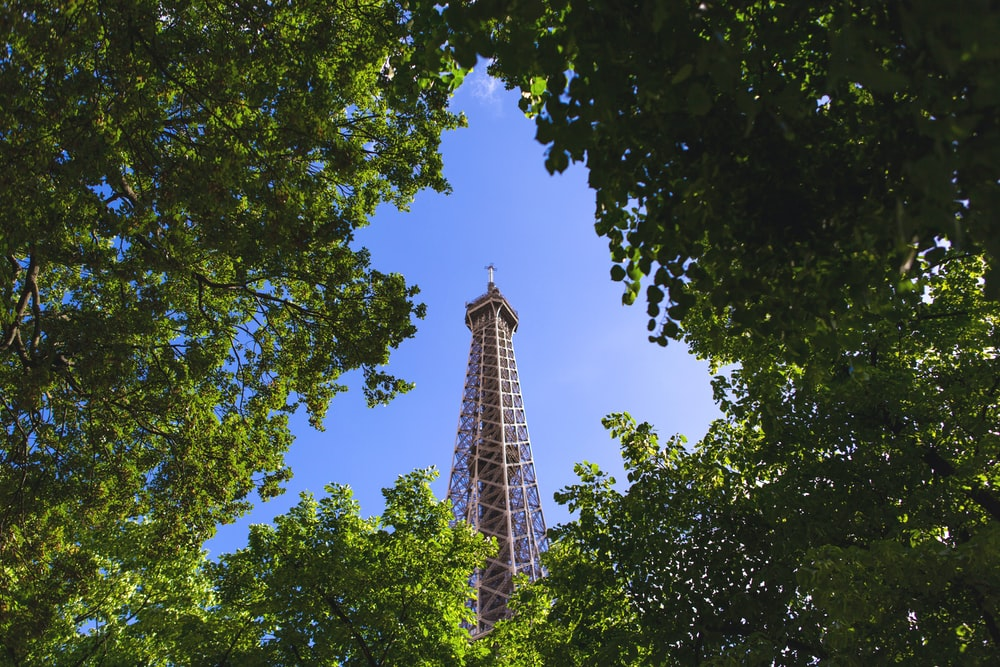 Eiffel Tower view from trees