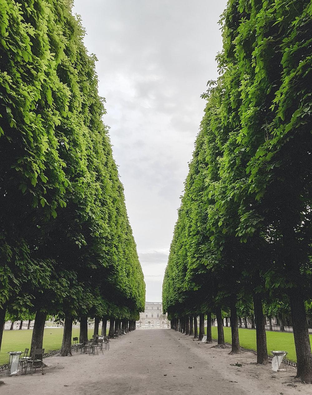 park between trees