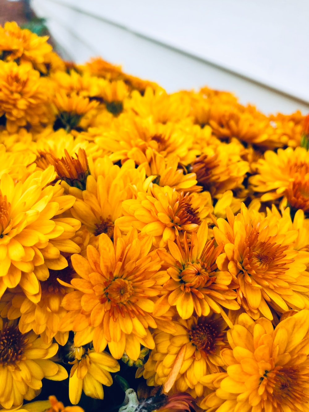 yellow cluster flower lot