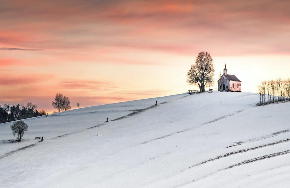 house near tree on hill
