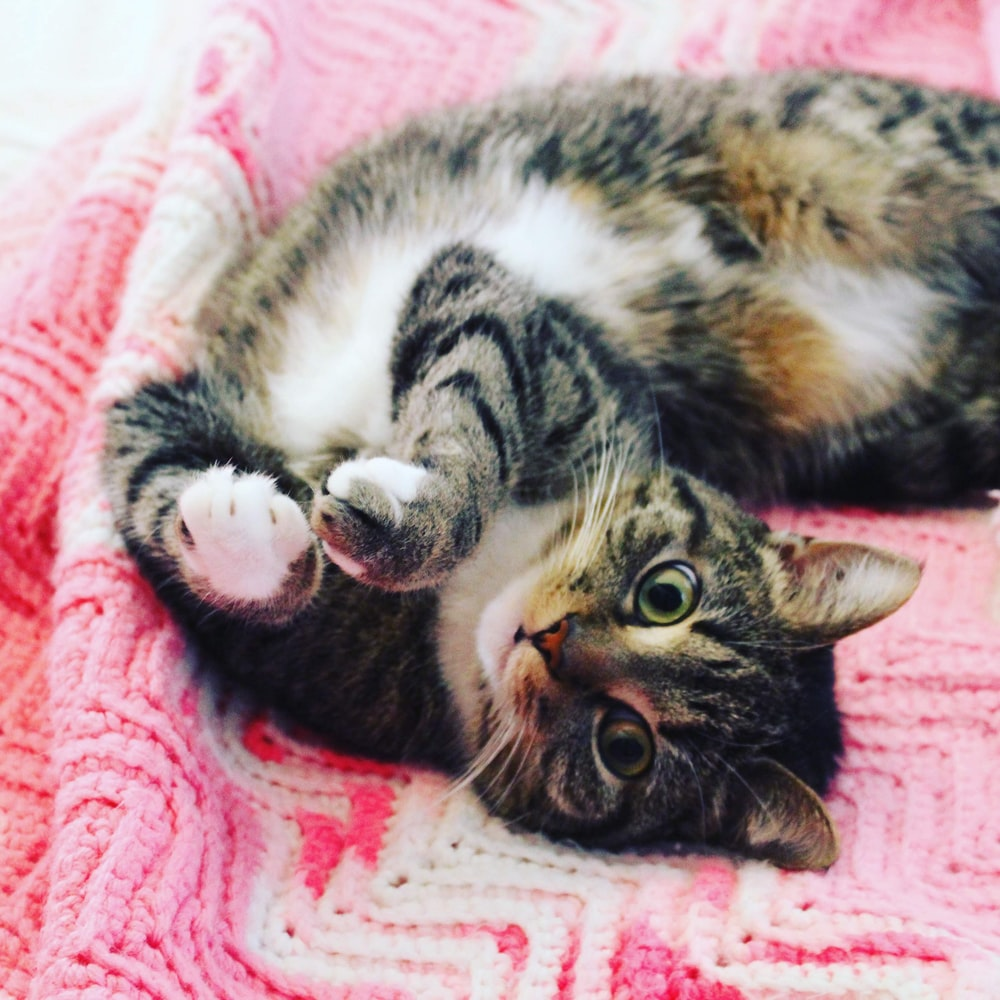 black, white, and brown tabby cat lying on pink crocheted cloth