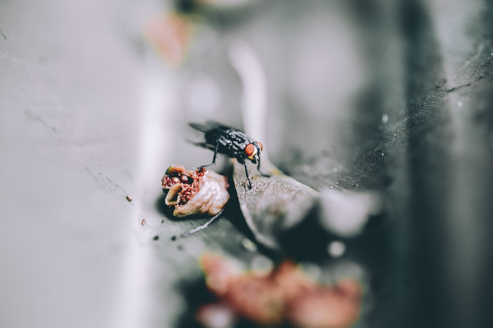 selective photography of black fly