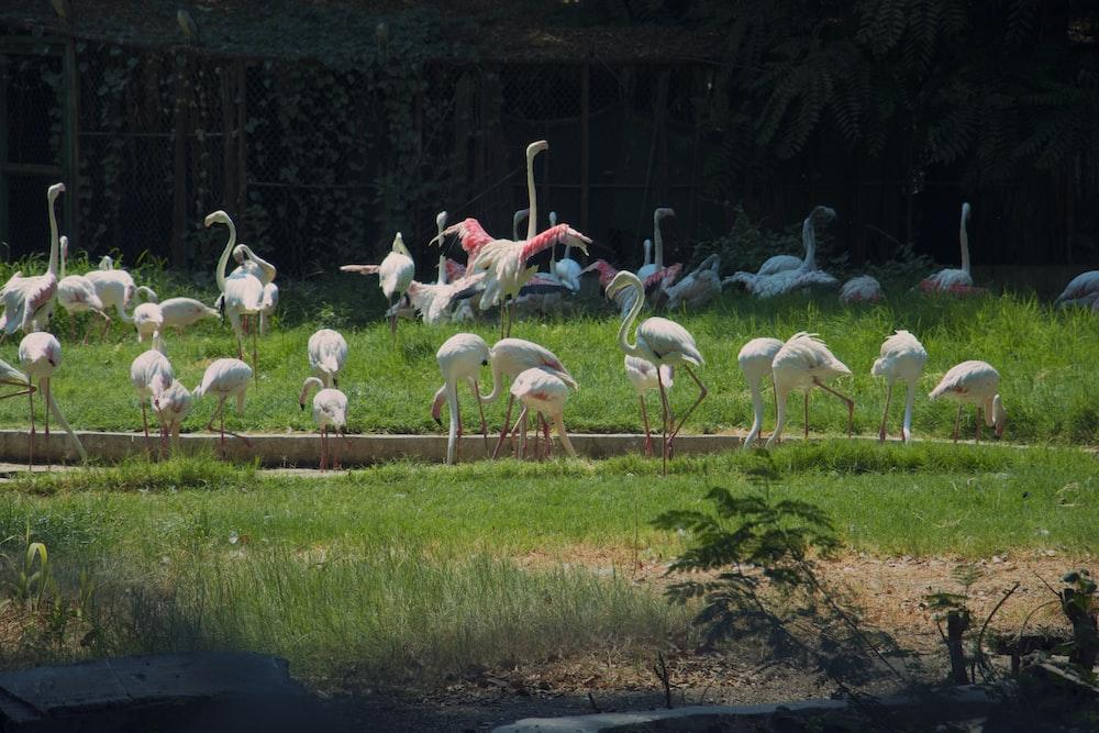ground white bird on green grass