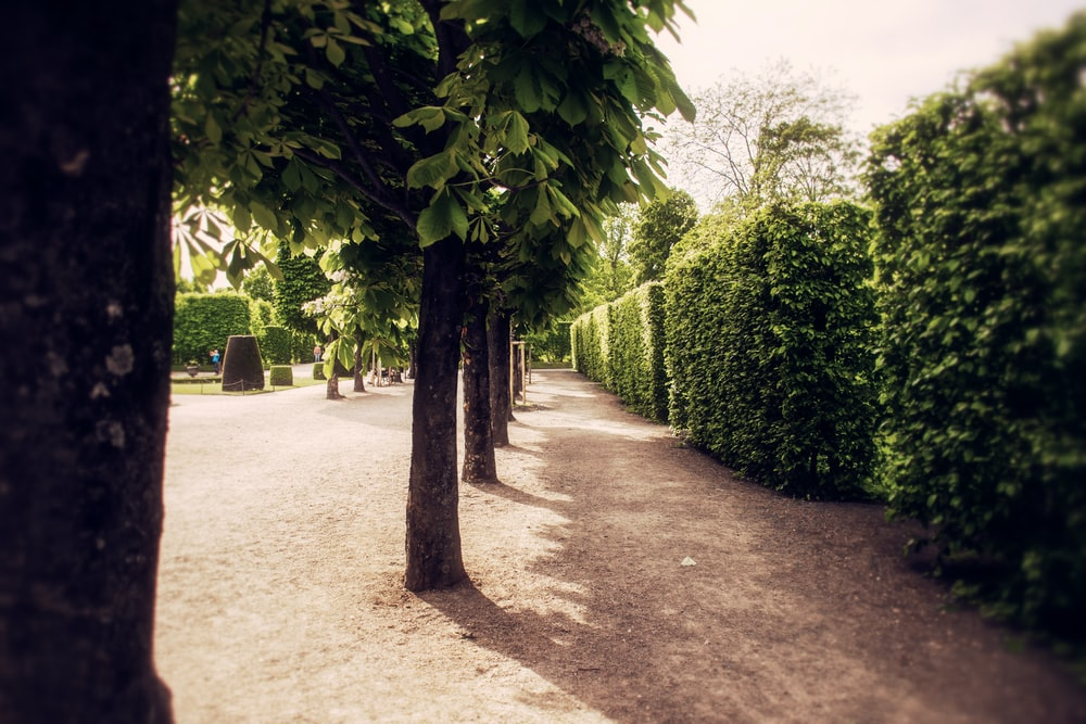 green bushes near trees during daytime