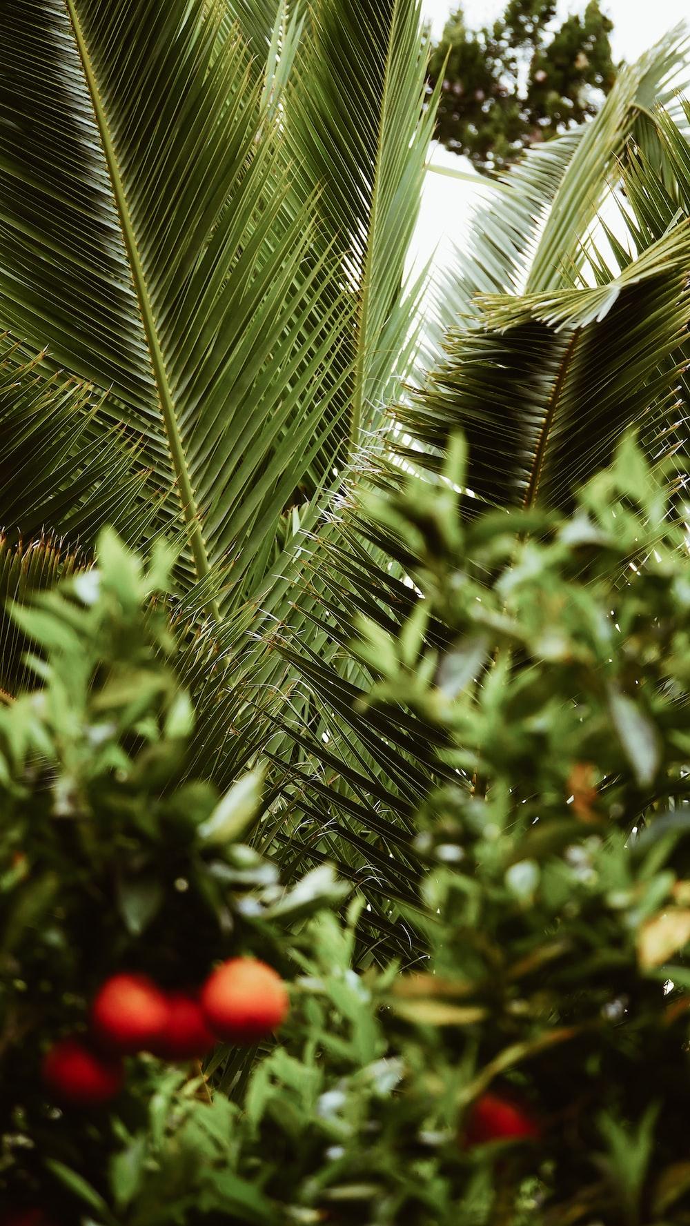 green coconut tree near green leaf plants
