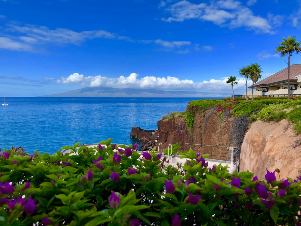blooming purple flowers viewing beach house and calm blue sea under blue and white skies