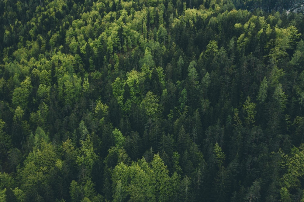 500+ Green Color Pictures | Download Free Images on Unsplash
