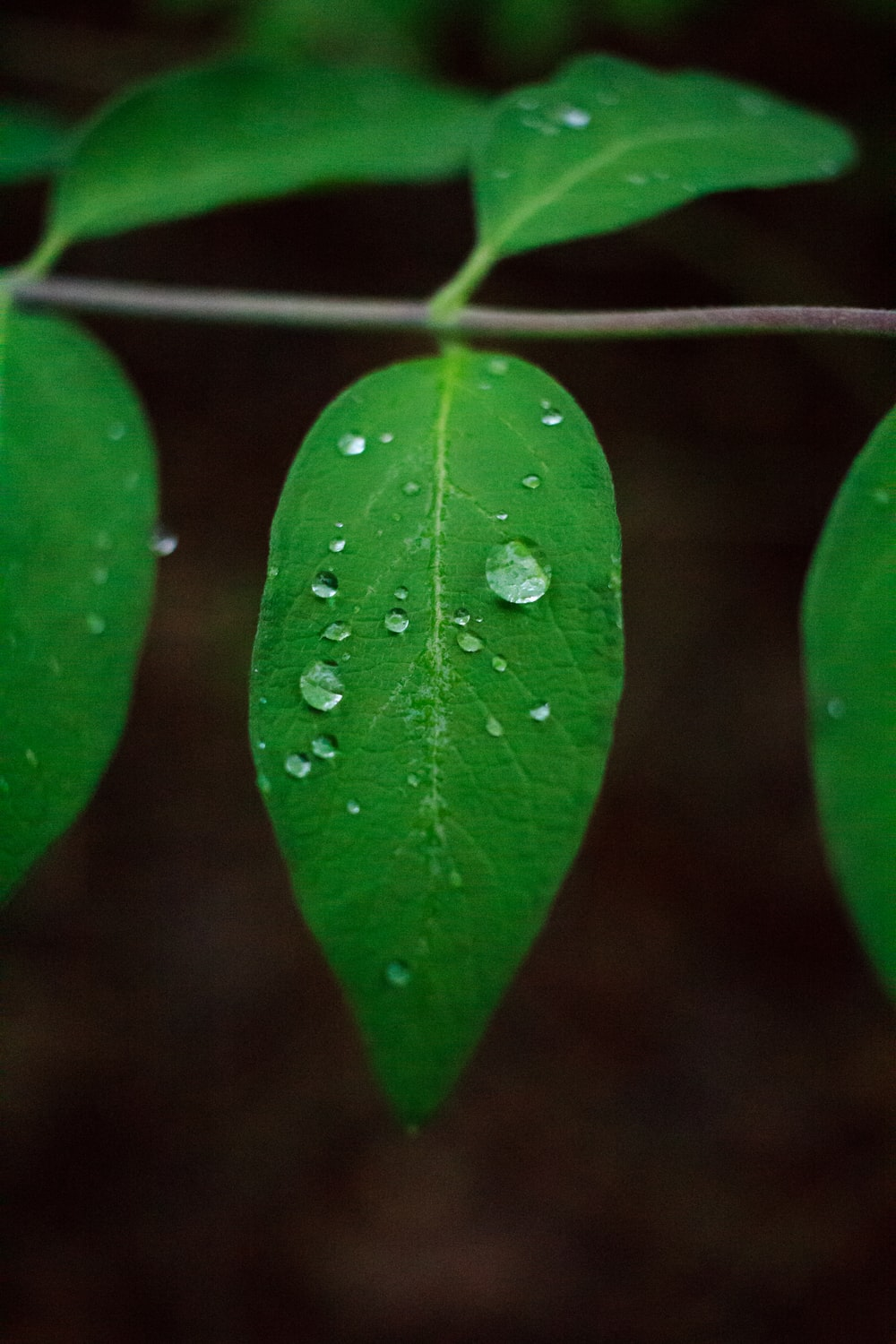 water droplet on green-leafed plant