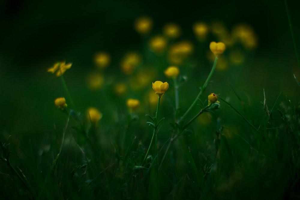 blooming yellow petaled flowers