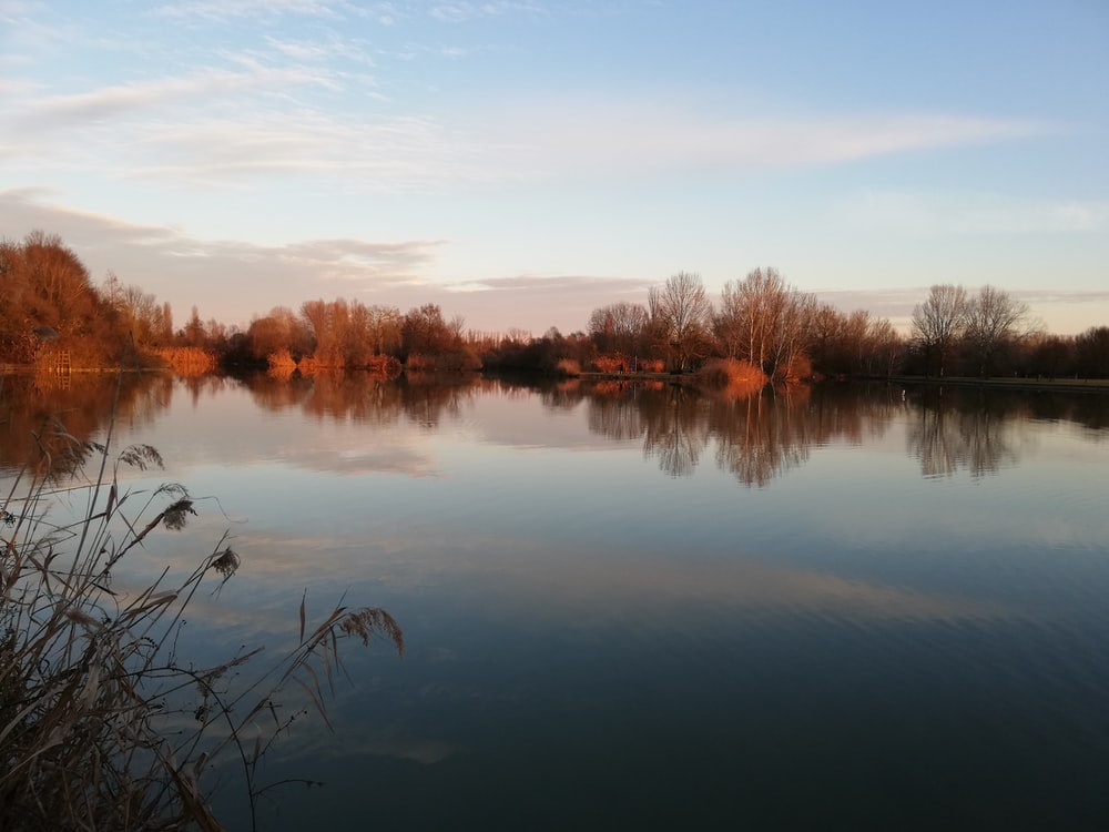 bare trees beside calm body of water during daytime