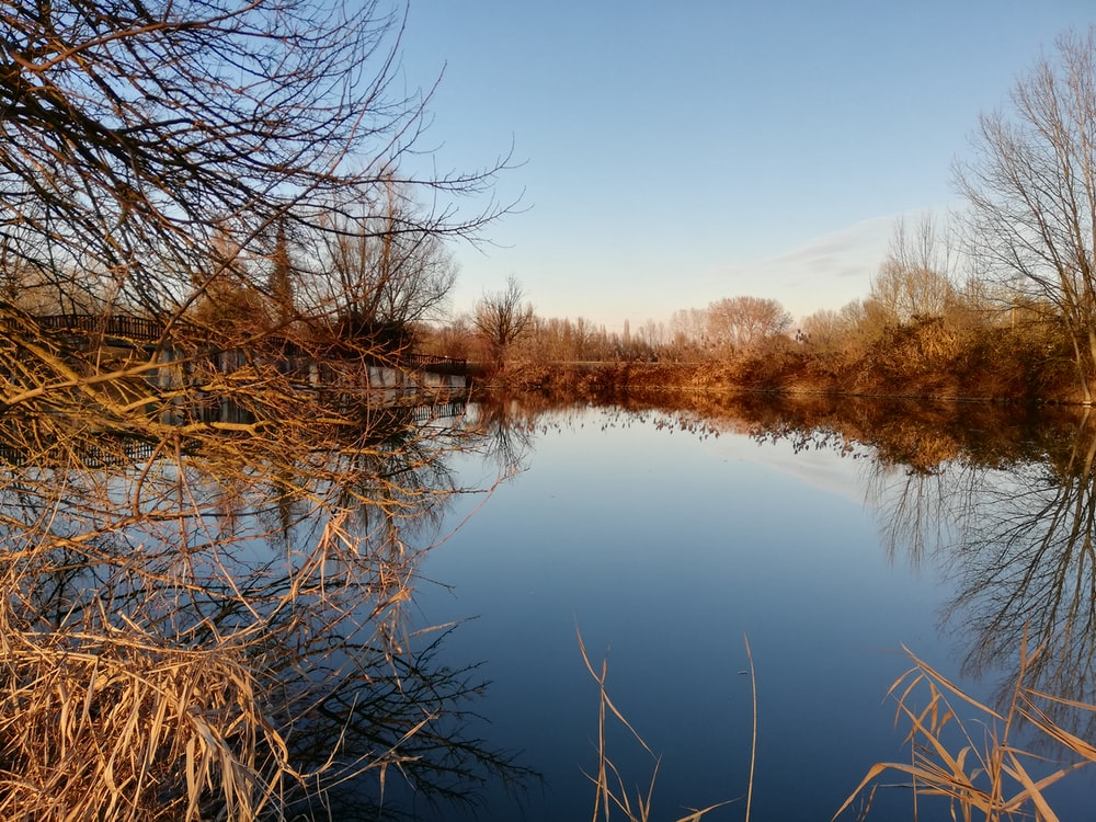 body of water near leafless tree