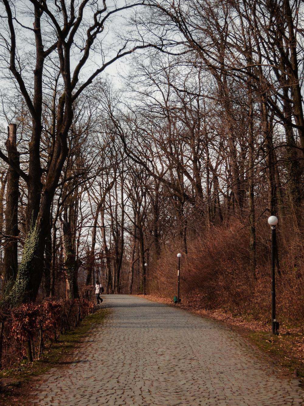 pathway under bare trees