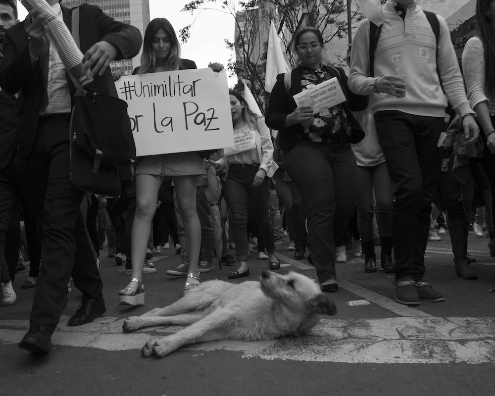 dog lying near protesters