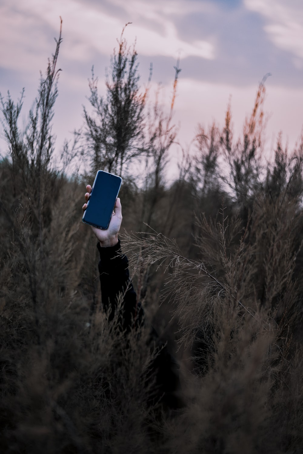 person raising phone on forest
