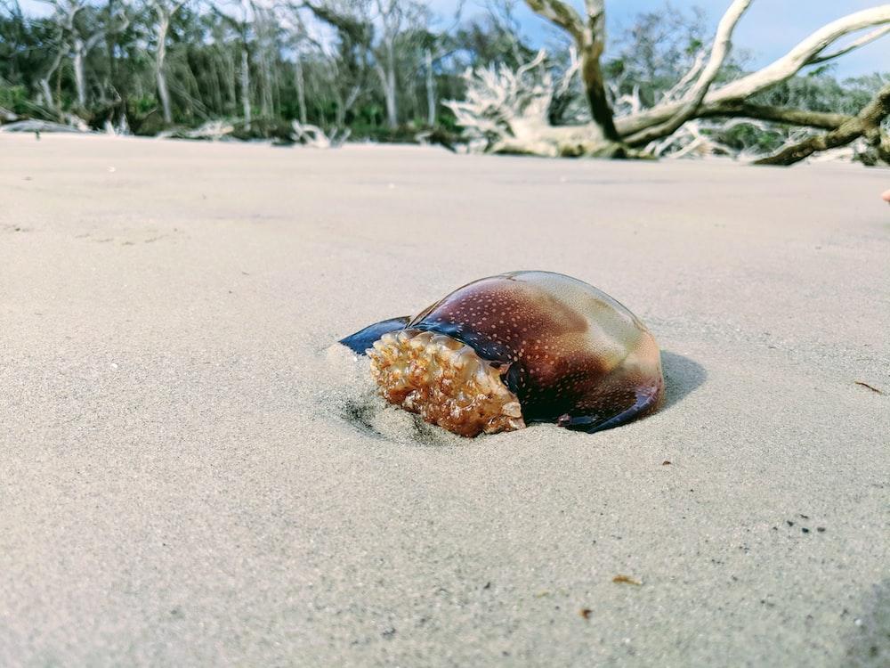 brown animal on sand near driftwood