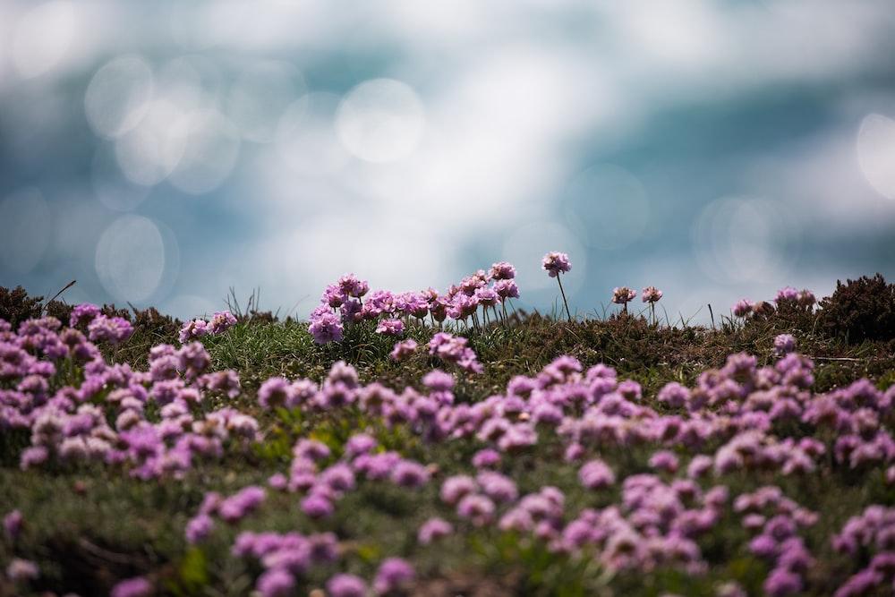 blooming purple cluster flowers