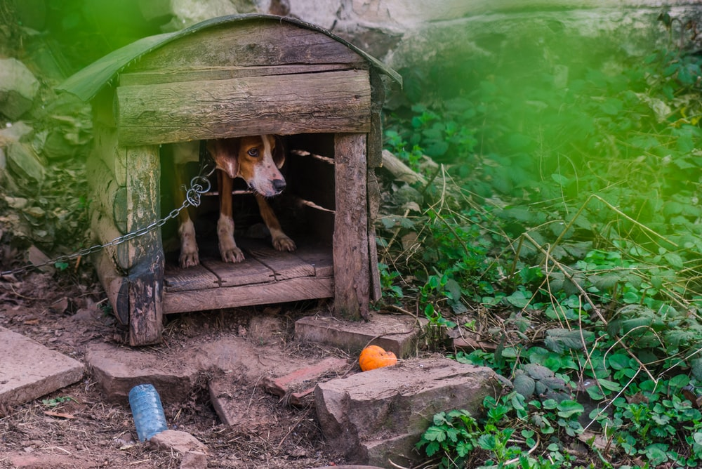 brown and white dog on brown wooden doghouse