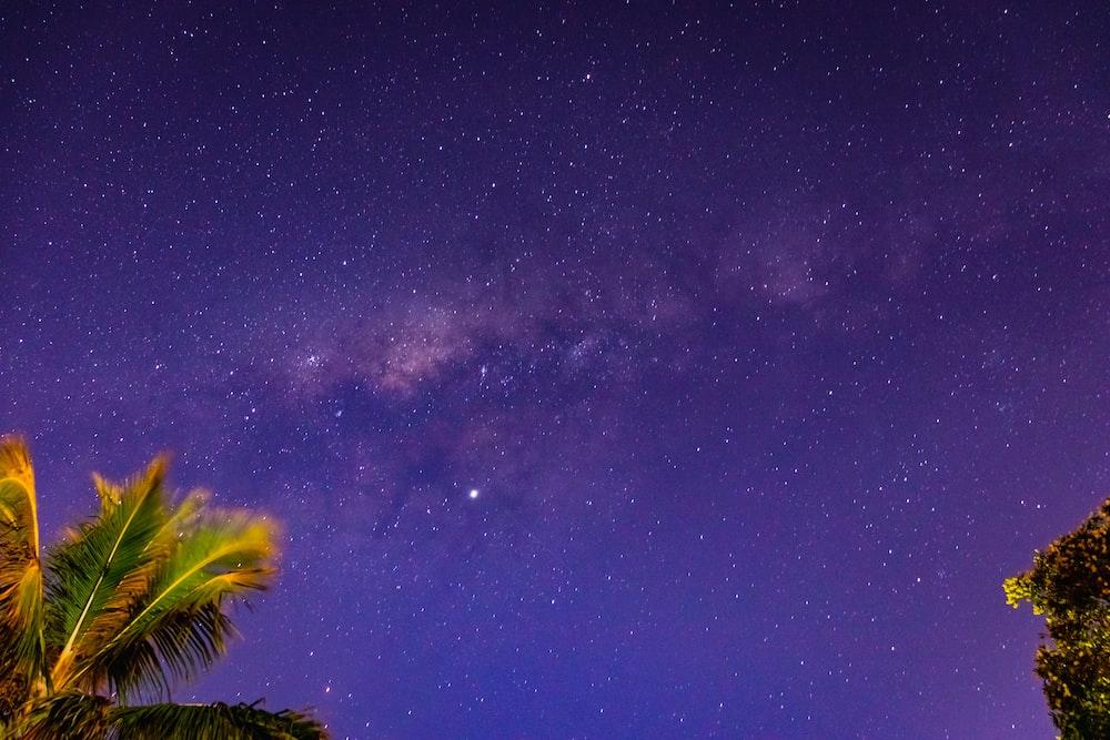 palm tree across night sky