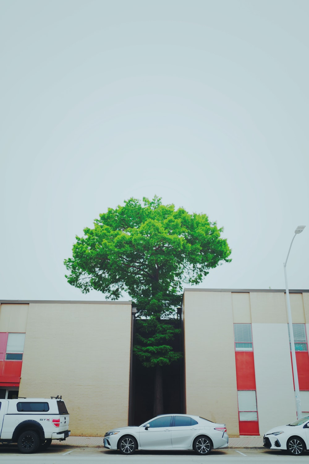 green leaf tree in between two brown building during daytime