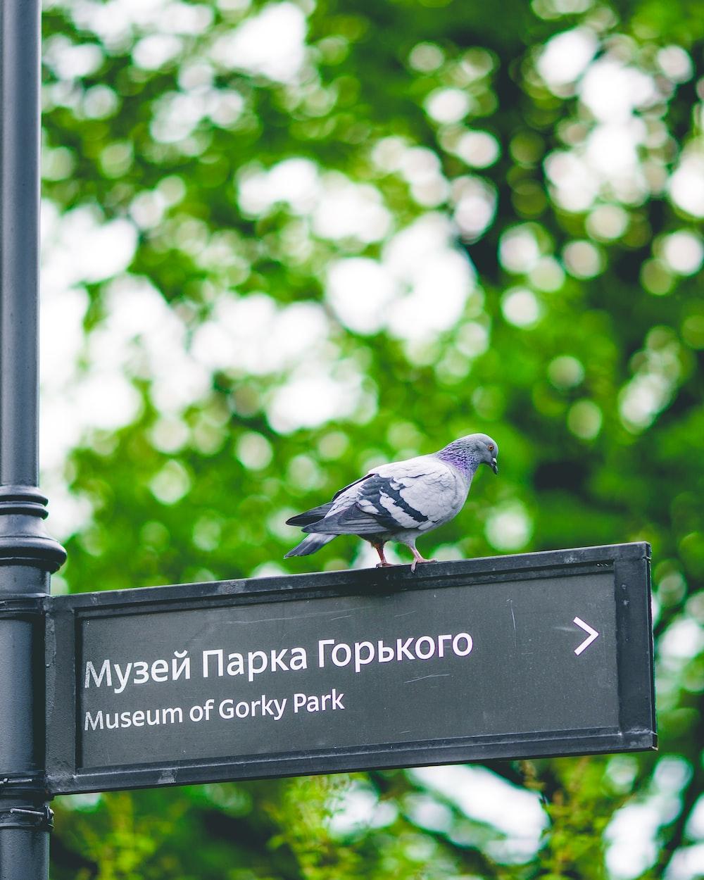 bird on sign board