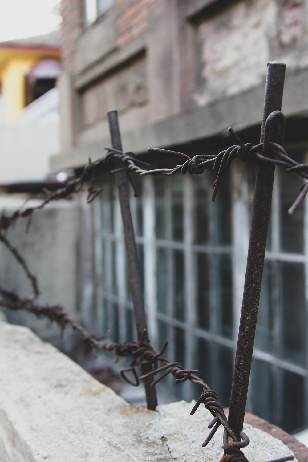 shallow focus photography of gray barbed wire