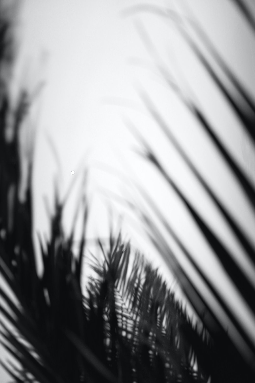 leaf close-up photography