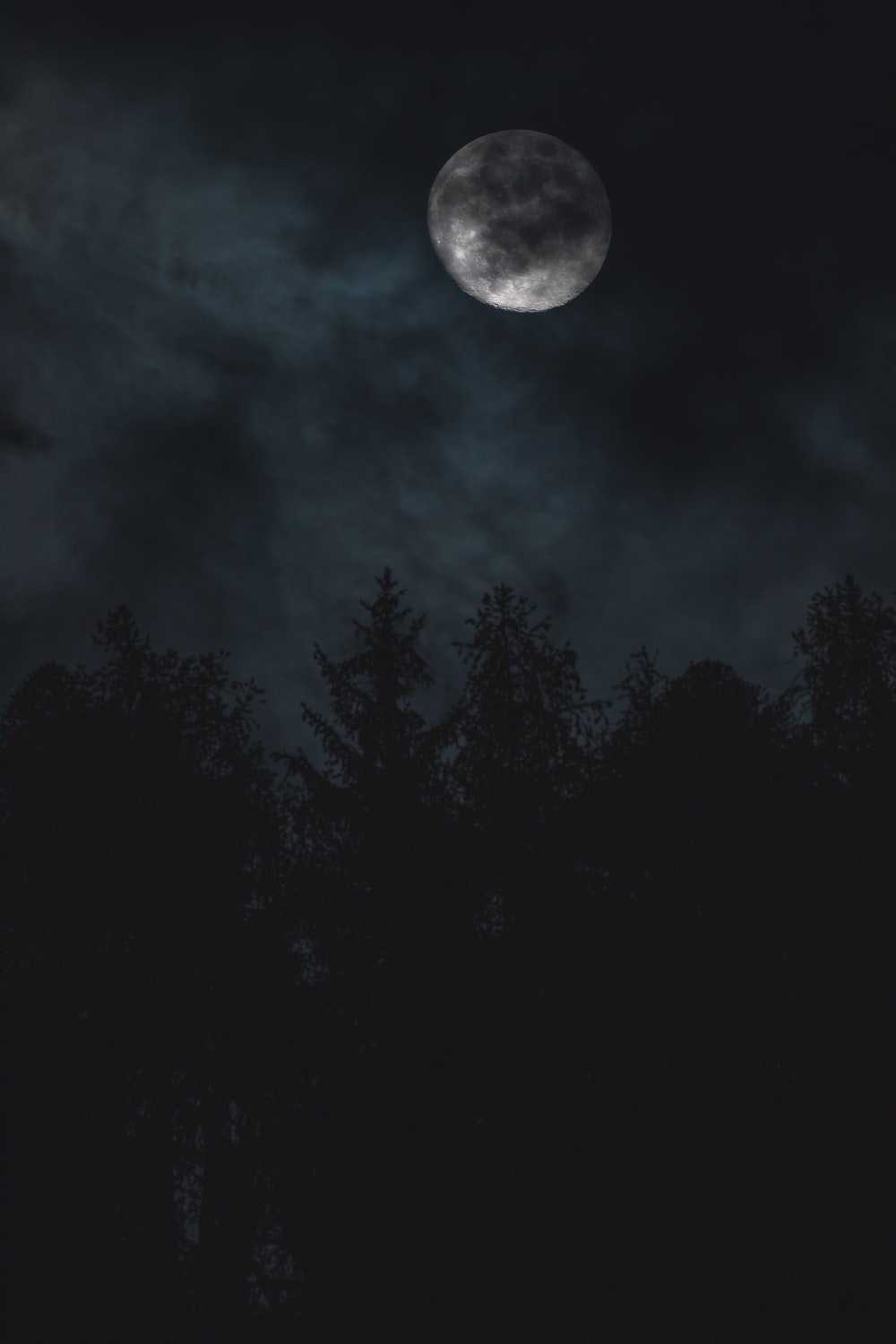 silhouette of trees under moon