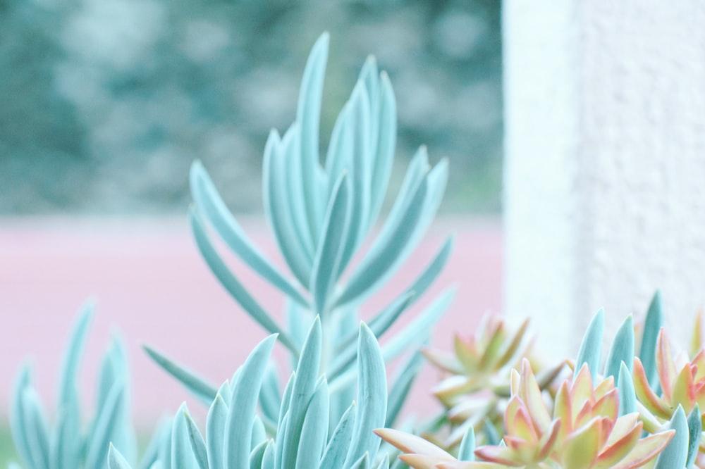 blue leafed plant