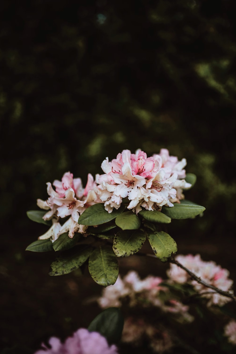 shallow focus photo of white and pink flowers