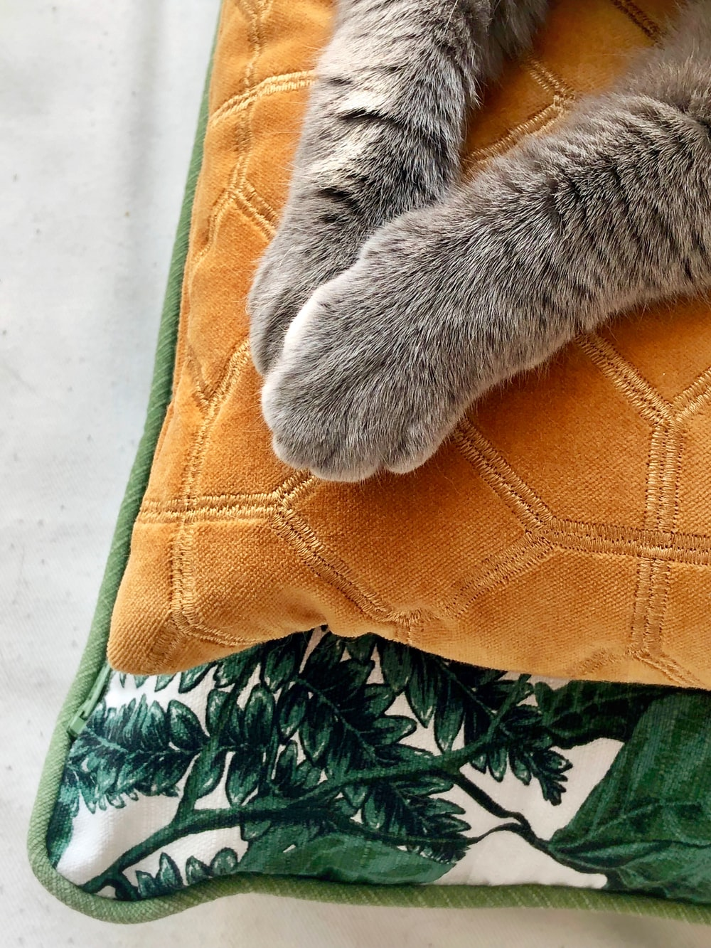 cat paw in a orange textile close-up photography