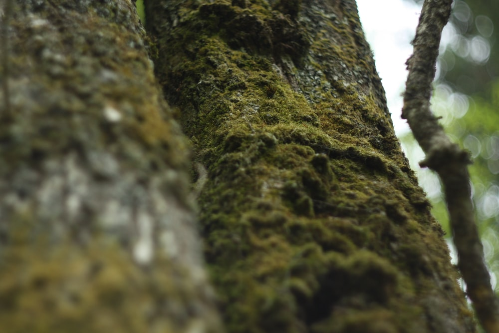 selective focus photography of tree trunk with algae