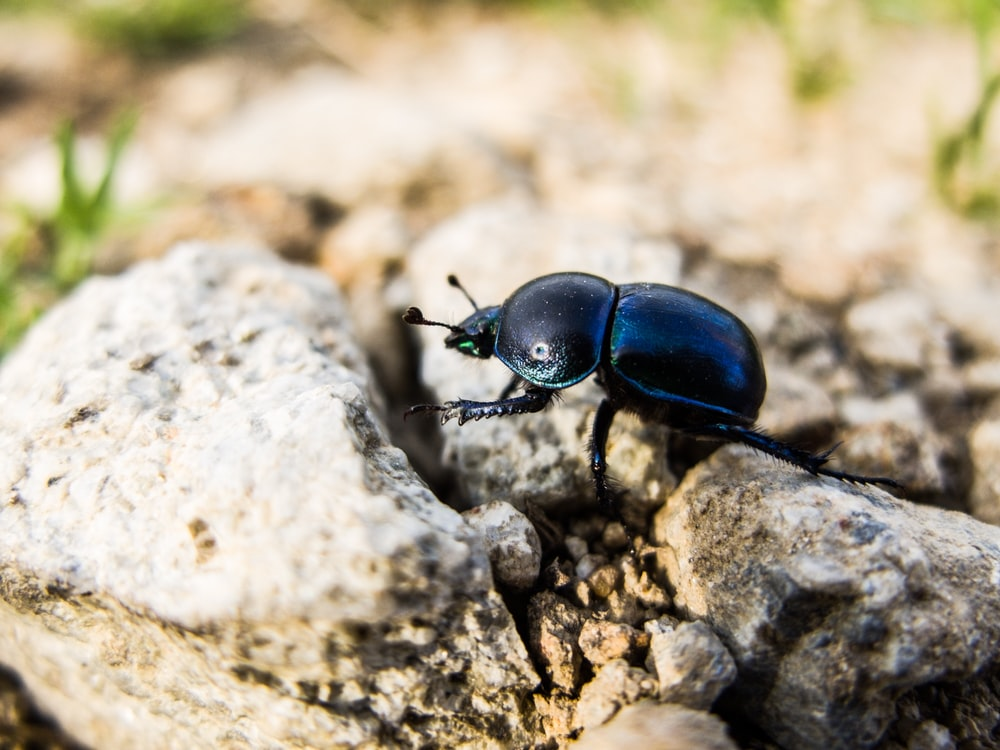 selective focus photography of beetle