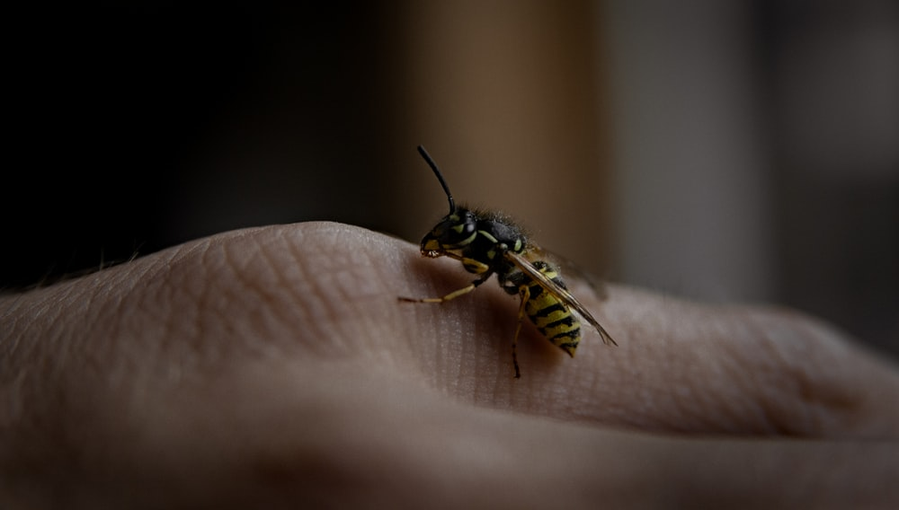 paper wasp on human hand