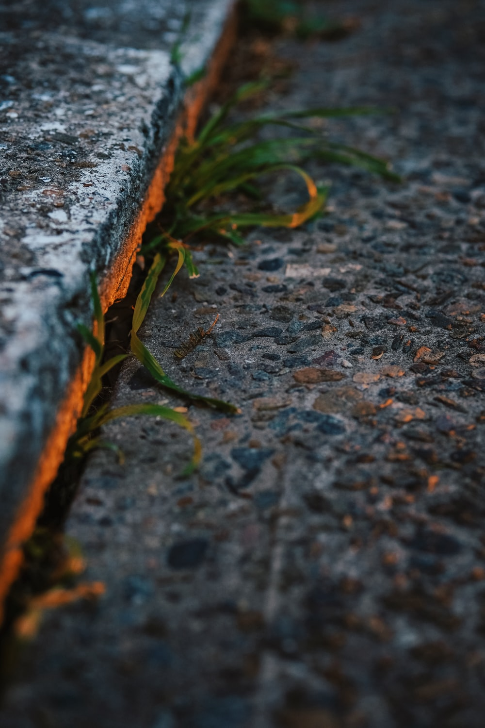 green plant in concrete surface