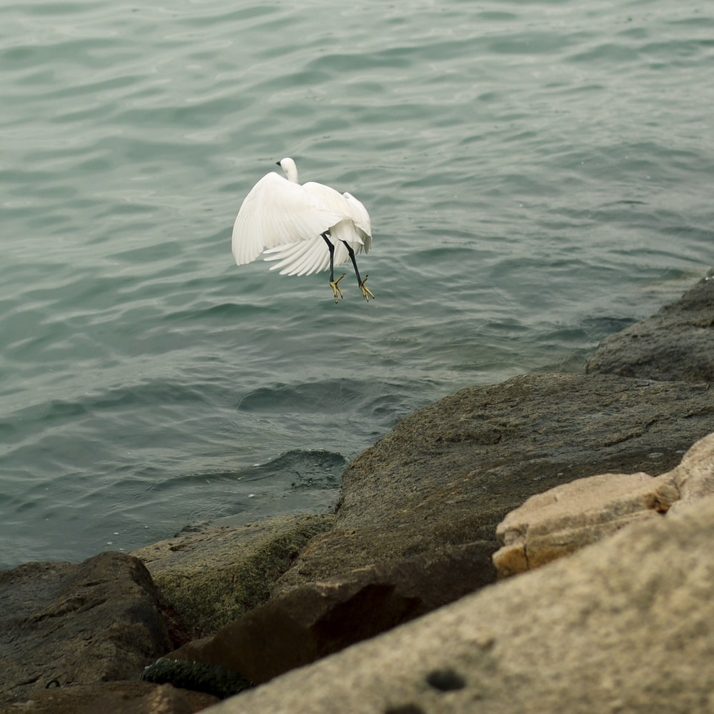 white bird flying from stone sea wall