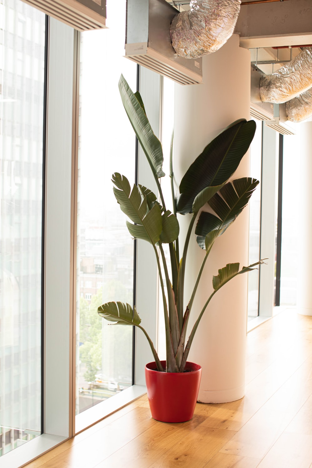 potted green plant near glass wall